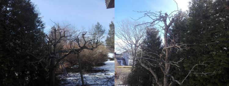 beskärning av träd stuvsta